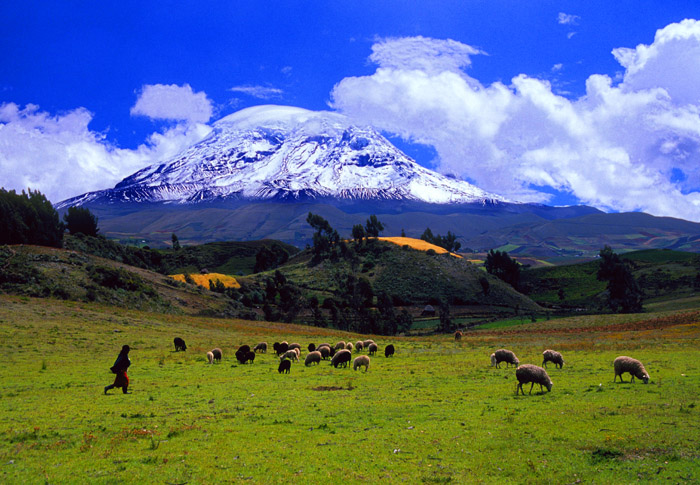 Cat #01-36-35 Chimborazo volcano and sheep herd