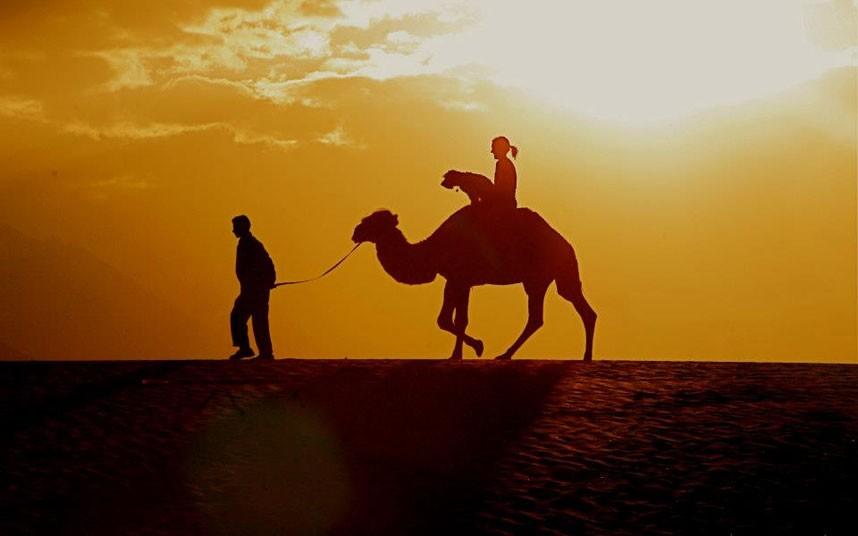 oscar-egypt-camel_2454445k