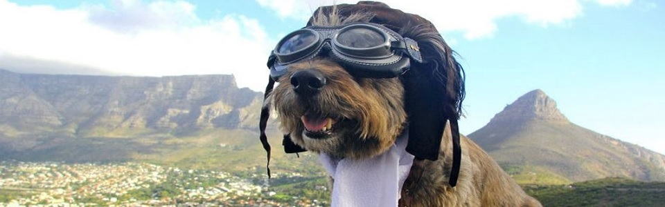 oscar the dog in cape town