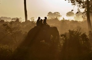 featured image Caroline Casey Elephant India