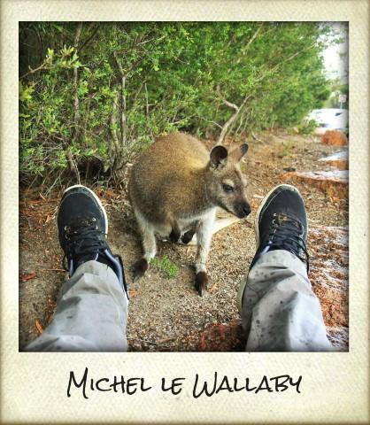 wallaby.jpg (Small)